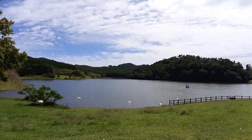 志高湖キャンプ場と白鳥