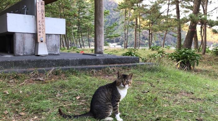 大分県無料キャンプ場の波当津海水浴場の流し台と猫
