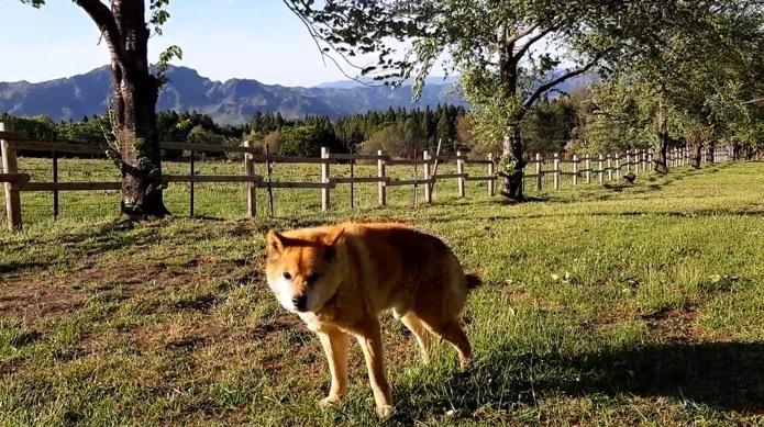 阿蘇 鍋の平キャンプ場の看板犬ジョン